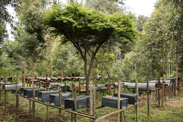 Beehives owned and run by Franiz Maritim outside the Mau Forest Complex. Image by Nathan Siegel for Mongabay.