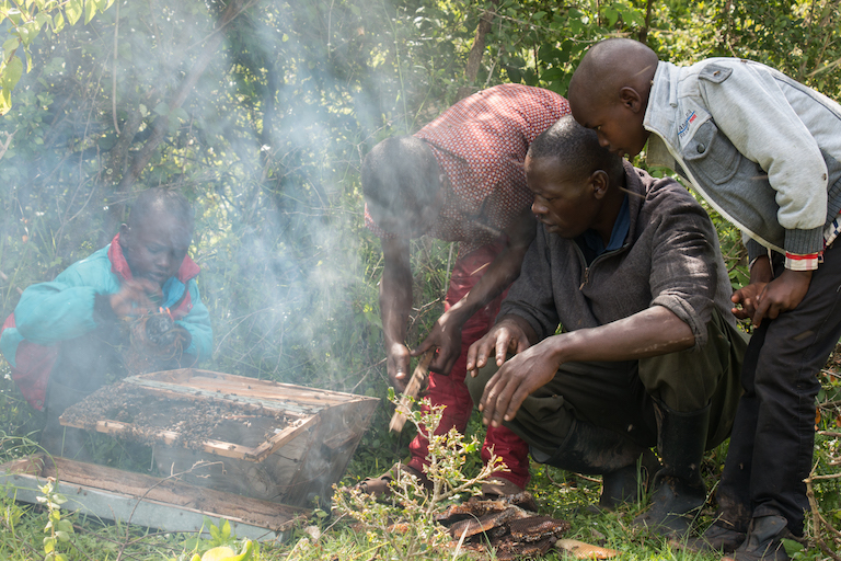 The children of Franiz Maritim harvest honey. Image by Nathan Siegel for Mongabay.
