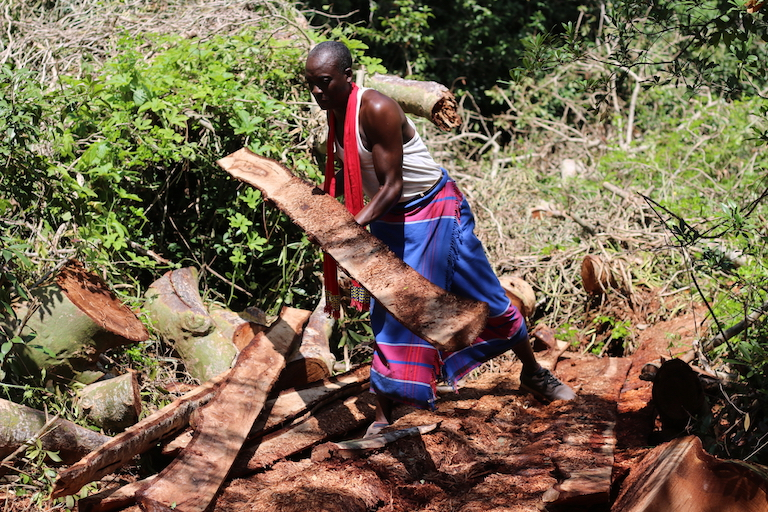 Elder Mwanza Mwangiri assesses the timber left behind by illegal loggers at Kaya Kauma. Image by Sophie Mbugua for Mongabay.