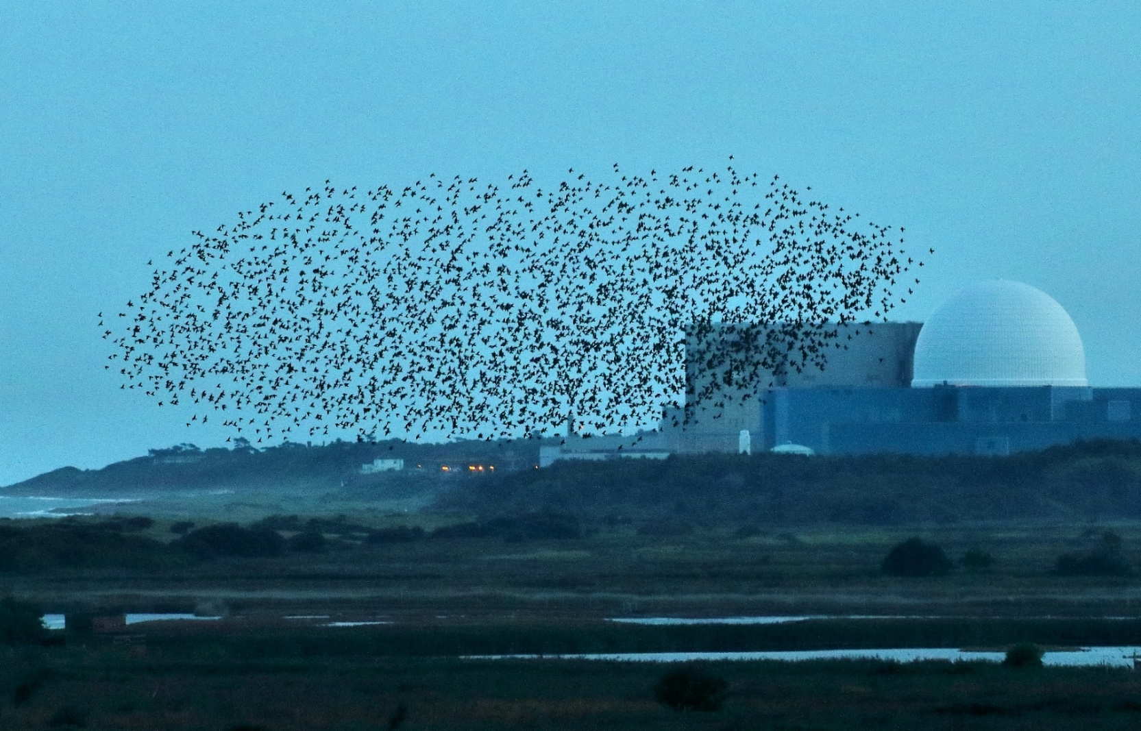 A flock, or murmuration, of starlings flies across a nature reserve in Suffolk, England. Image by Airwolfhound,