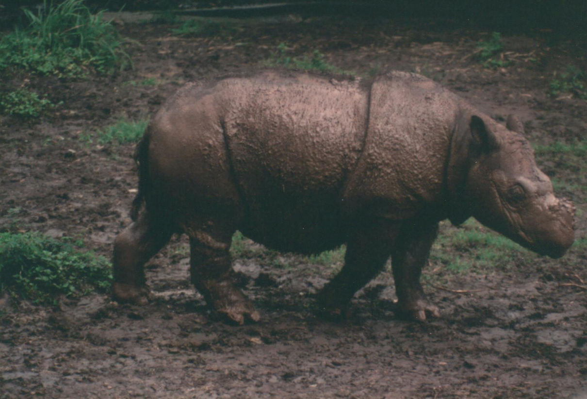 The rhino reckoning