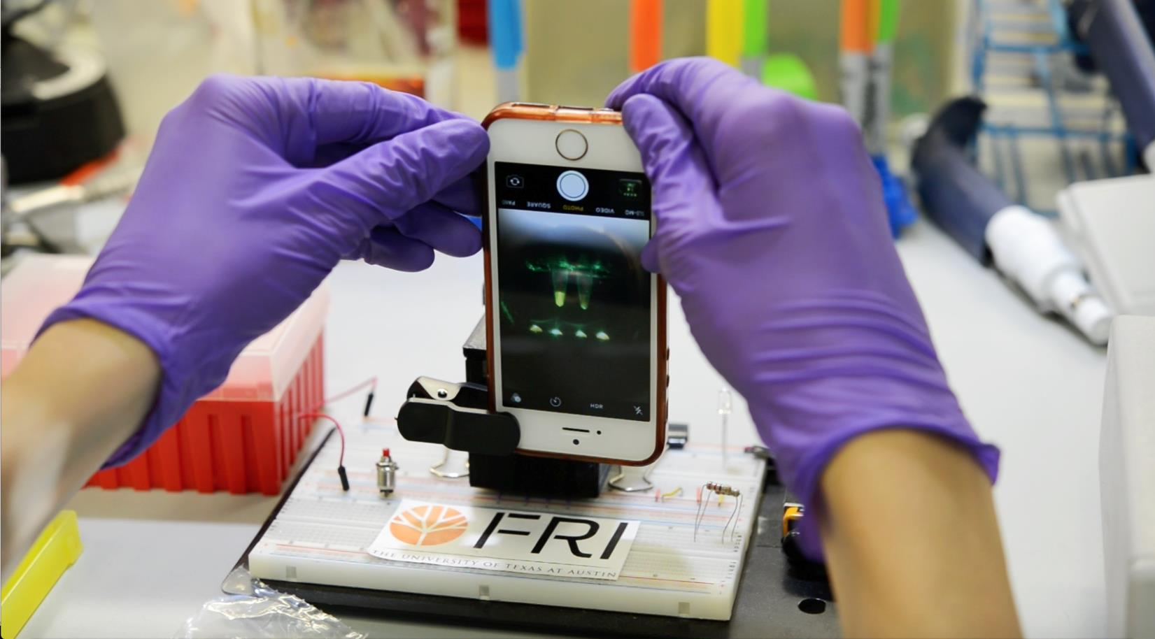 A user can easily record the results of a search for genes unique to Ae. aegypti and Wolbachia using a smartphone camera.