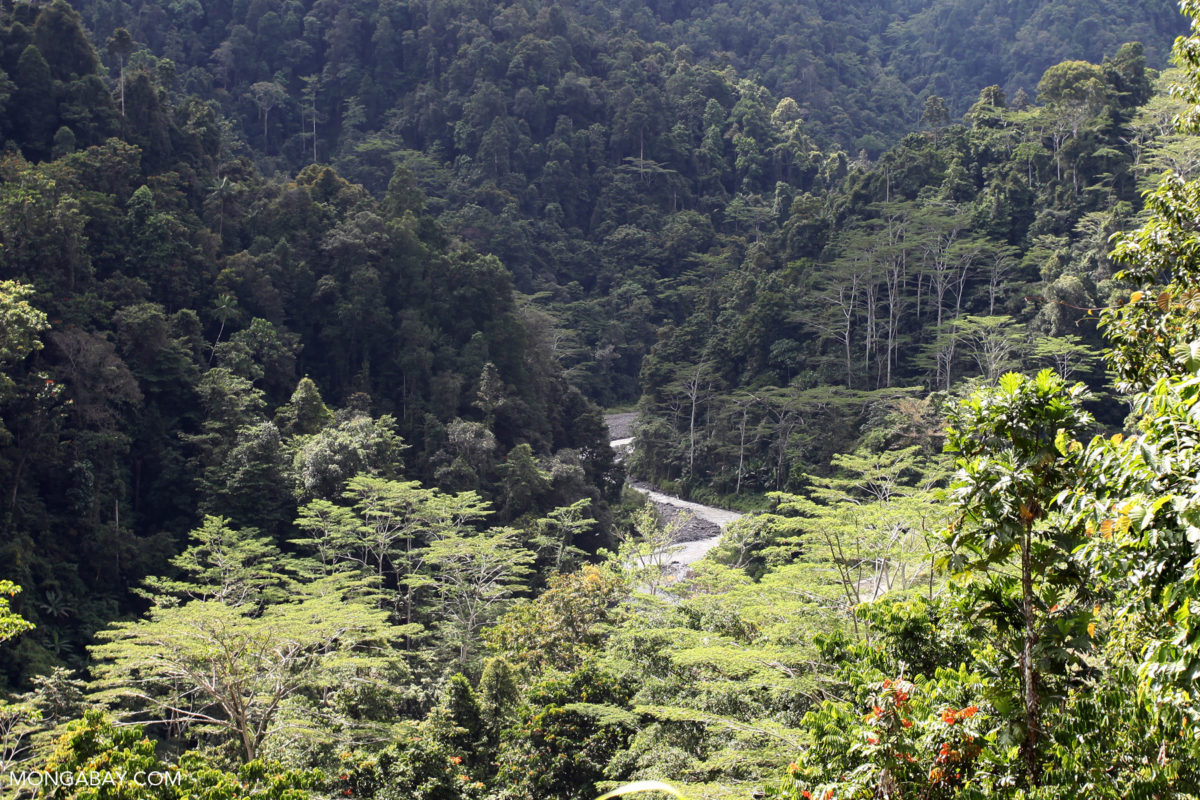 Forest in West Papua. Photo by Rhett A. Butler