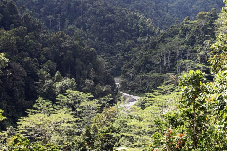 Hutan di Papua Barat.  Foto oleh Rhett A. Butler