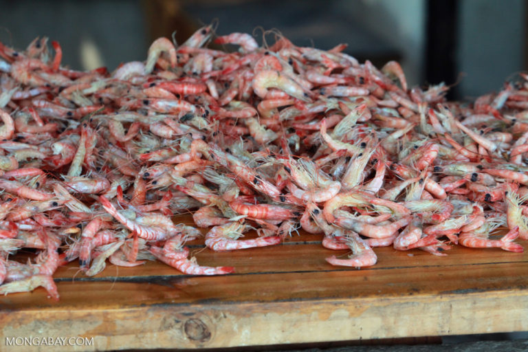 A pile of shrimp in Madagascar. Image by Rhett A. Butler.