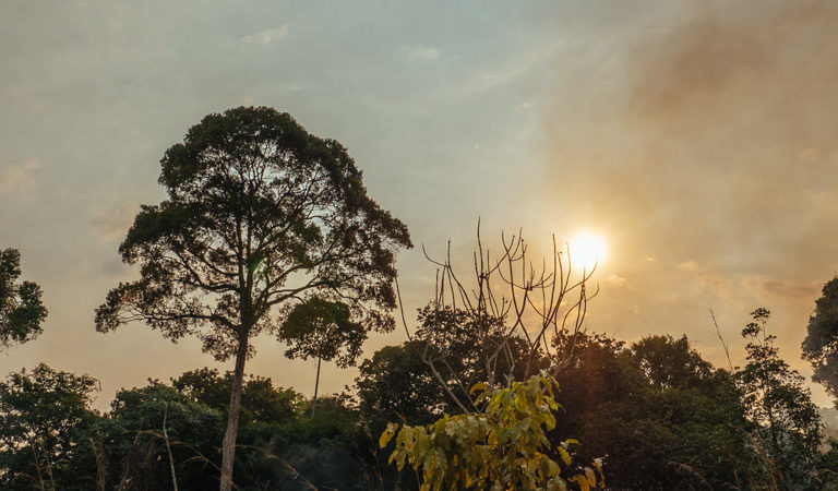 Fire fundamentally alters carbon dynamics in the Amazon