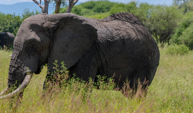 $25m in funding to help African gov'ts prosecute poachers, traffickers