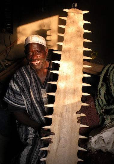 The late Ousseynou Sagna, a village leader and founding member of the fishermen's association that developed the Kawawana ICCA, holds a saw from a seven-meter (23-foot) sawfish. The fish haven't reached this size locally in many years. Image courtesy of Grazia Borrini-Feyerabend.