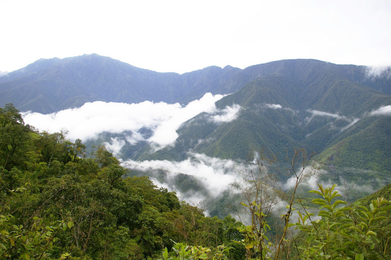 Conservation News On Bolivia
