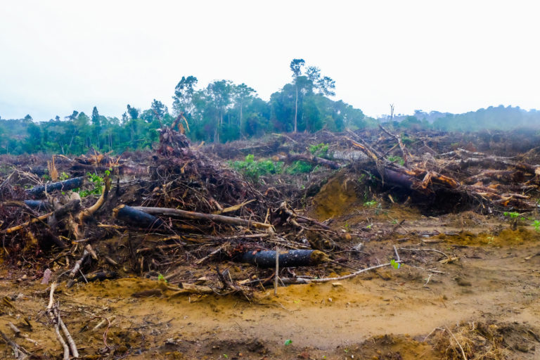 Is S&P Dow Jones greenwashing conflict palm oil? (commentary)
