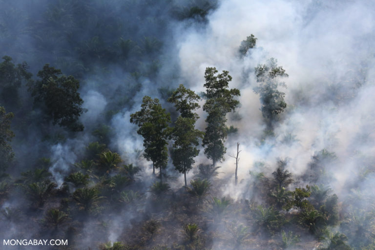 Fire burning through peat forest and an oil palm plantation in Sumatra in 2015. Photo by Rhett A. Butler.
