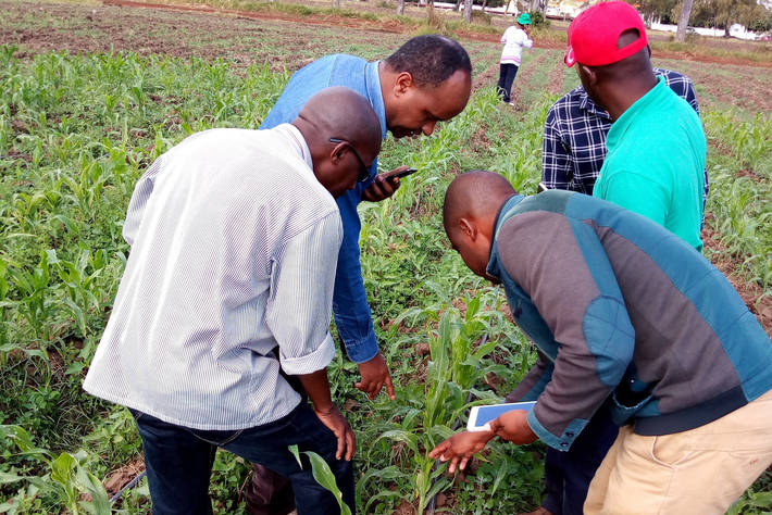 Farmers and extension agents test the Nuru app with maize plants in Mozambique.