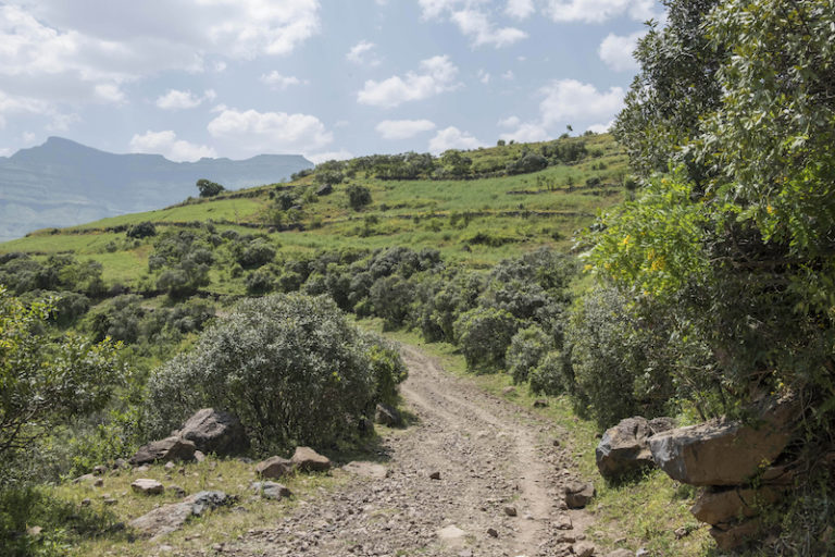 Part of a secured land for restoration in Meket, Amhara region. Photo by Maheder Haileselassie Tadese for Mongabay.