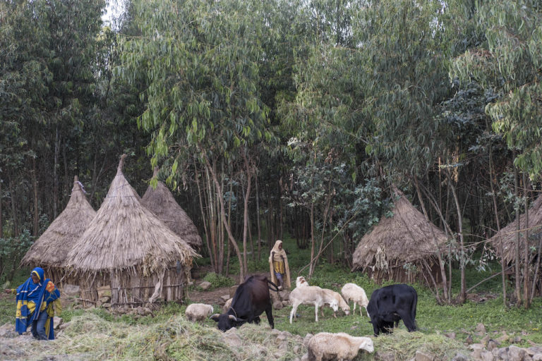 Students of the church live in small huts around the church's land. Photo by Maheder Haileselassie Tadese for Mongabay.
