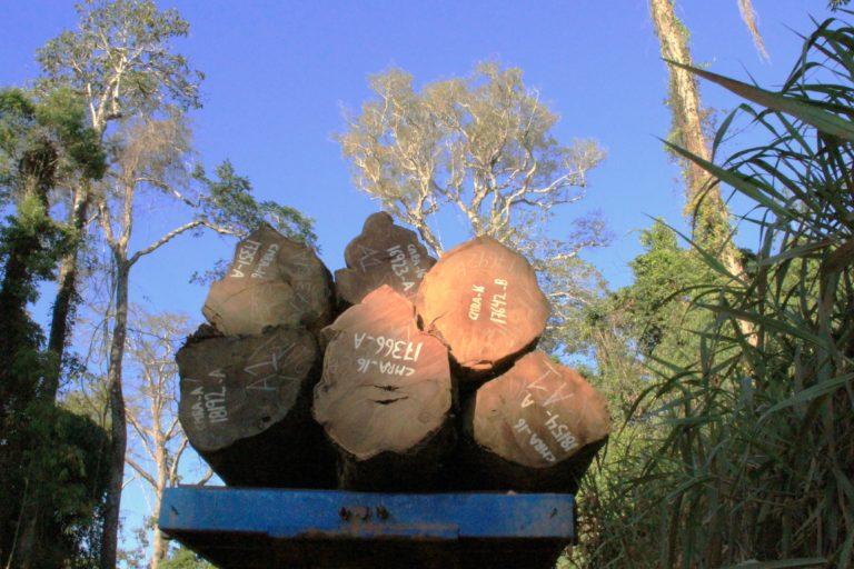 The last trees of the Amazon