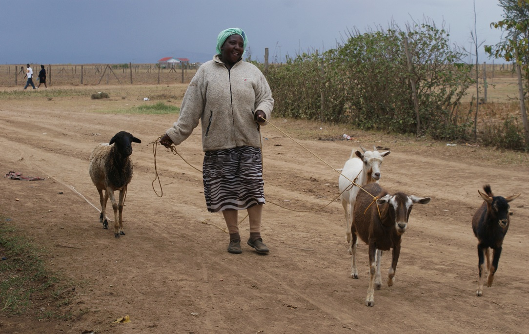 Margaret Wanjugu leading her herd of goats home from Gathorongai forest in central Kenya, where they were grazing. The forest is prone to unexpected fire outbreaks.