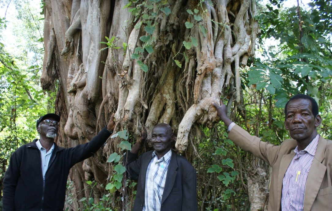Members of the Atiriri Bururi Ma Chuka community conservation group from central Kenya showing some of the indigenous tree species that are continuously threatened by fire outbreaks.