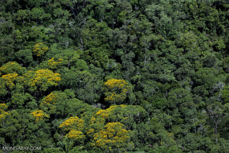 Brazil could lose Nepal-size area of rainforest due to policy revision