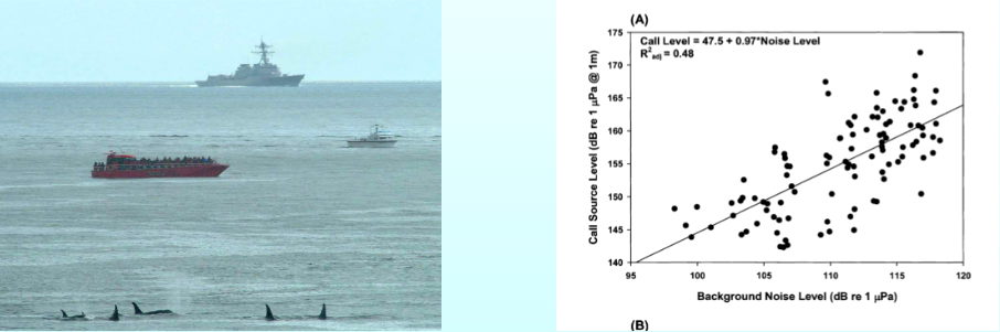 The ranges of several pods of southern resident killer whales include shipping lanes for large ships that produce loud noise through both their movements and high-pitched sonar that can mask the whales' echolocation clicks and hinder the animals' ability to find food. On the right is the Orcasound project's data showing how killer whales under increasingly noisy conditions call more loudly to try to be heard.