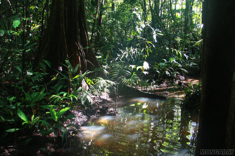 Rainforest in Suriname. Photo by Rhett A. Butler.