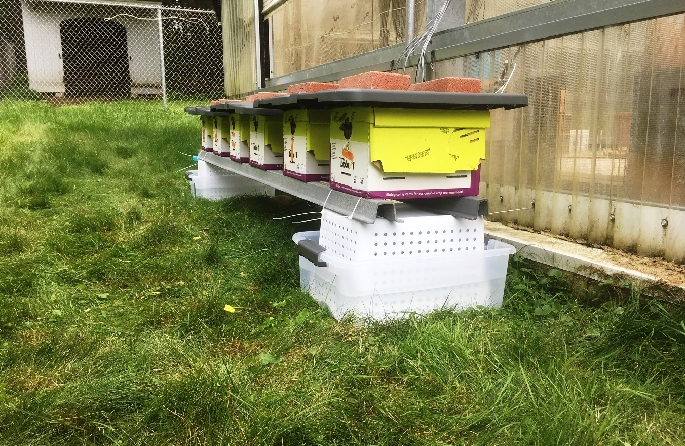 Monitoring of the internal temperature of outdoor bumblebee colonies with digital sensors showed that chronic neonicotinoid pesticide exposure disrupted the bees' thermoregulation.