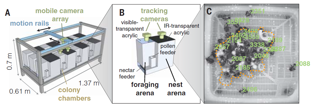 Camera-wielding robot records effects of pesticide on bees