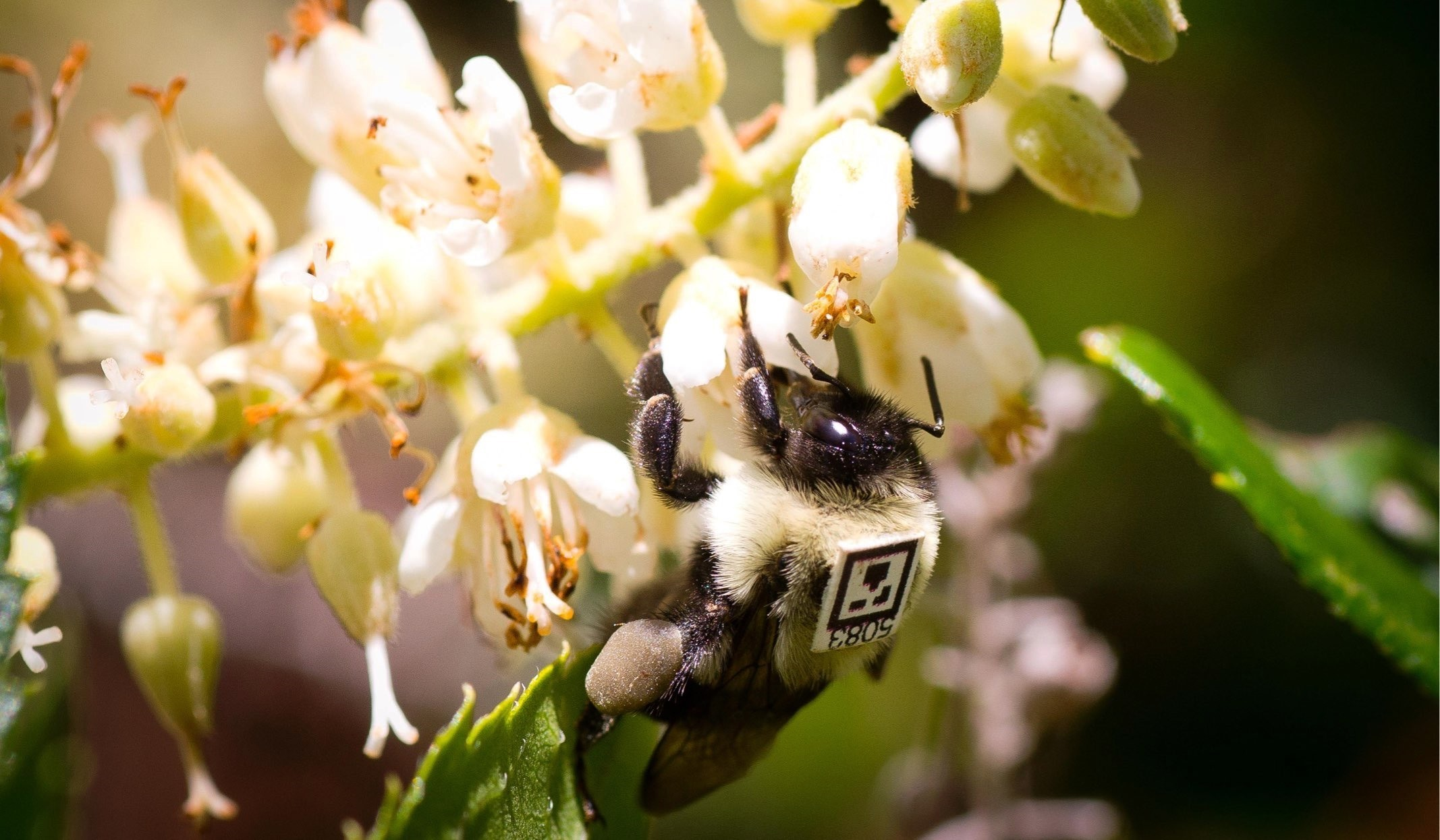 891f0b2bb Camera-wielding robot records effects of pesticide on bees' behavior