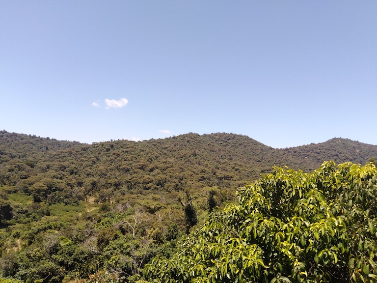 A view of Mukogodo Forest, a 302-square-kilometer (117-square-mile) tract of largely intact dry forest that is home to 45 mammal species, including threatened elephants, buffaloes and leopards, as well as around 200 bird and 100 butterfly species. Image by Shadrack Kavilu for Mongabay.