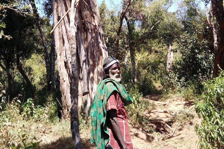 Yiaku elder Moses Litiku walks into Mukogodo Forest, the Yiaku's ancestral home. Image by Shadrack Kavilu for Mongabay.