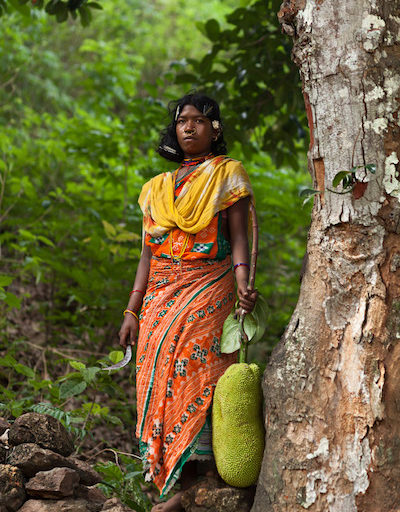 A Dongria woman collects wild jackfruit to sell in the market. Image by Indrajeet Rajkhowa.