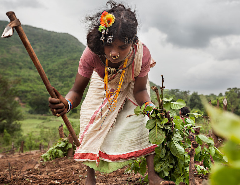 A Dongria woman from Barmaguda village removes weeds from her plot before sowing begins in the foothills of Niyamgiri. Image by Indrajeet Rajkhowa.