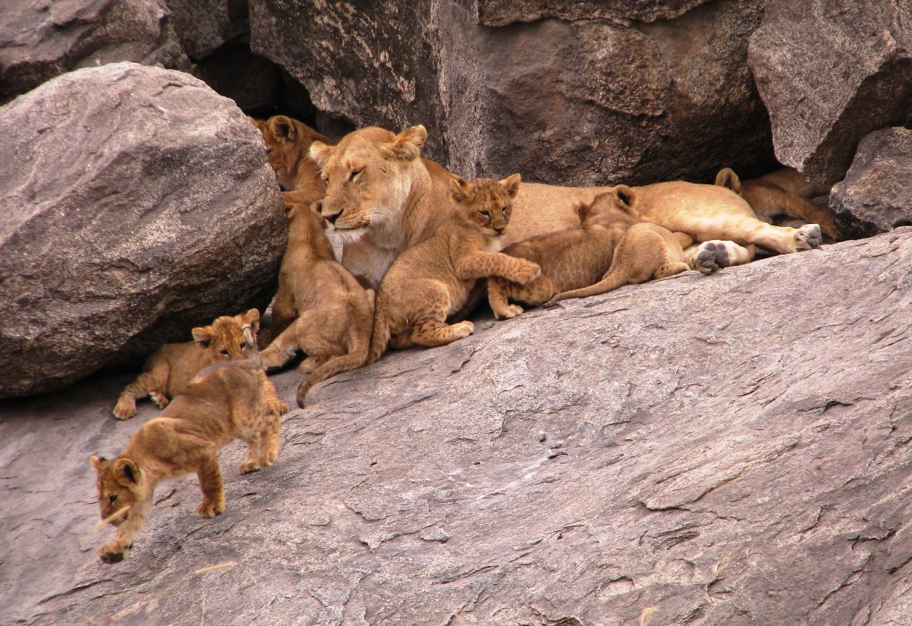 Creatures much smaller than baby lions still give off heat that can be detected at night by thermal imaging.