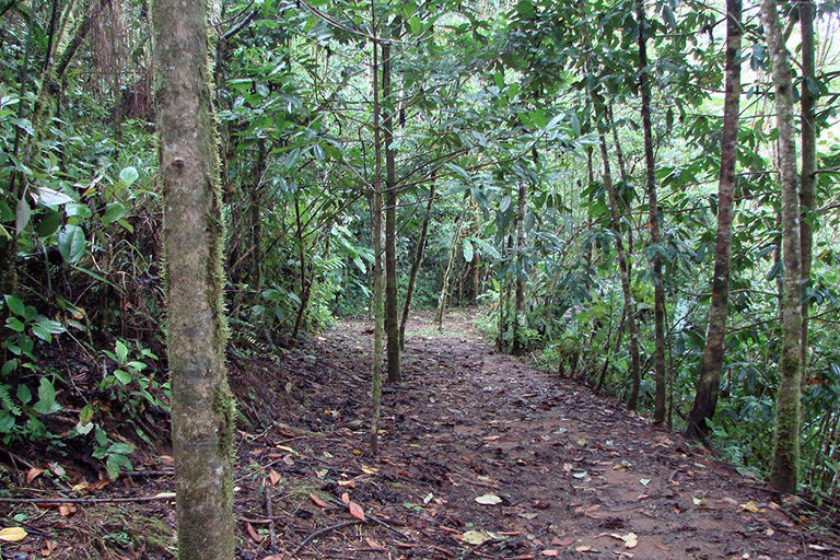 A trail through secondary forest at the Las Cruces Biological Station in southern Costa Rica. Photo by J. Leighton Reid.