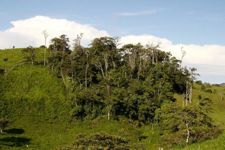 An isolated forest fragment surrounded by cattle pastures in southern Costa Rica. Photo by J. Leighton Reid.
