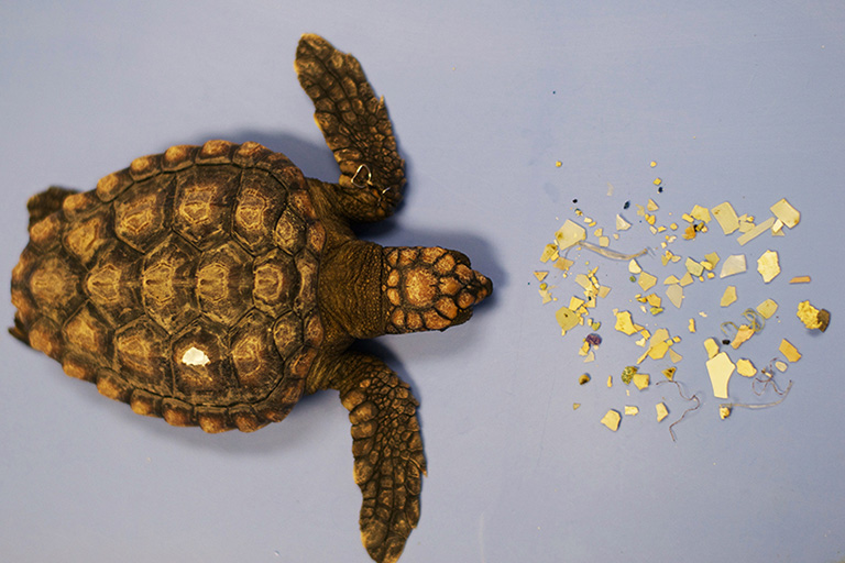 A rescued post-hatchling sea turtle lies next to its plastic stomach contents at the Loggerhead Marinelife Center in Juno Beach, Florida. Photo courtesy of Loggerhead Marinelife Center.