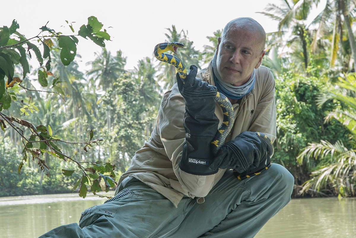 Bryan Fry holds a gold-ringed cat snake (Boiga dendrophila) that was used in the study. Photo courtesy of Bryan Fry.