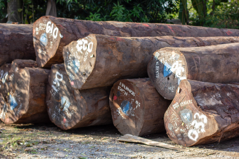 Hardwood timber imported to Vietnam from Africa. Photo by Chris Humphrey.