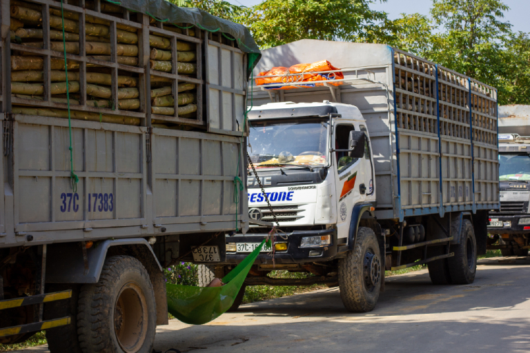 Trucks transporting Acacia trees in Nghe An Province, Vietnam. Photo by Chris Humphrey.
