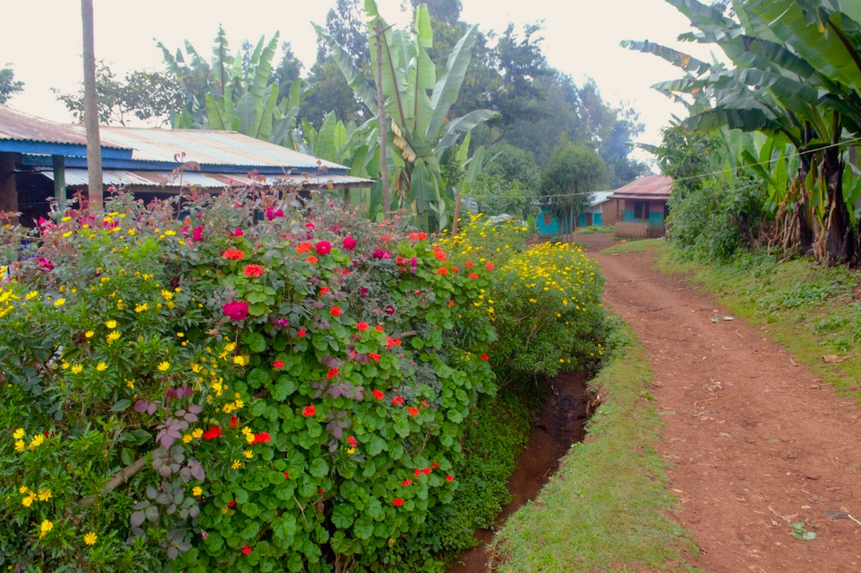 Agroforestry Home Gardens Build Community Resilience In Southern Ethiopia