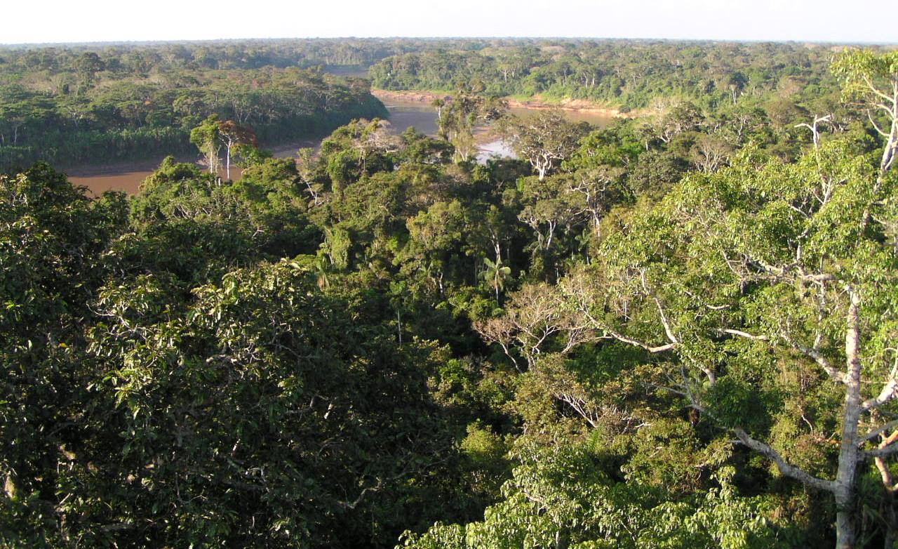 A view of the rainforest canopy in Madre de Dios, Peru from an observation tower. Aerial images from drones can be taken from above or from an angle.