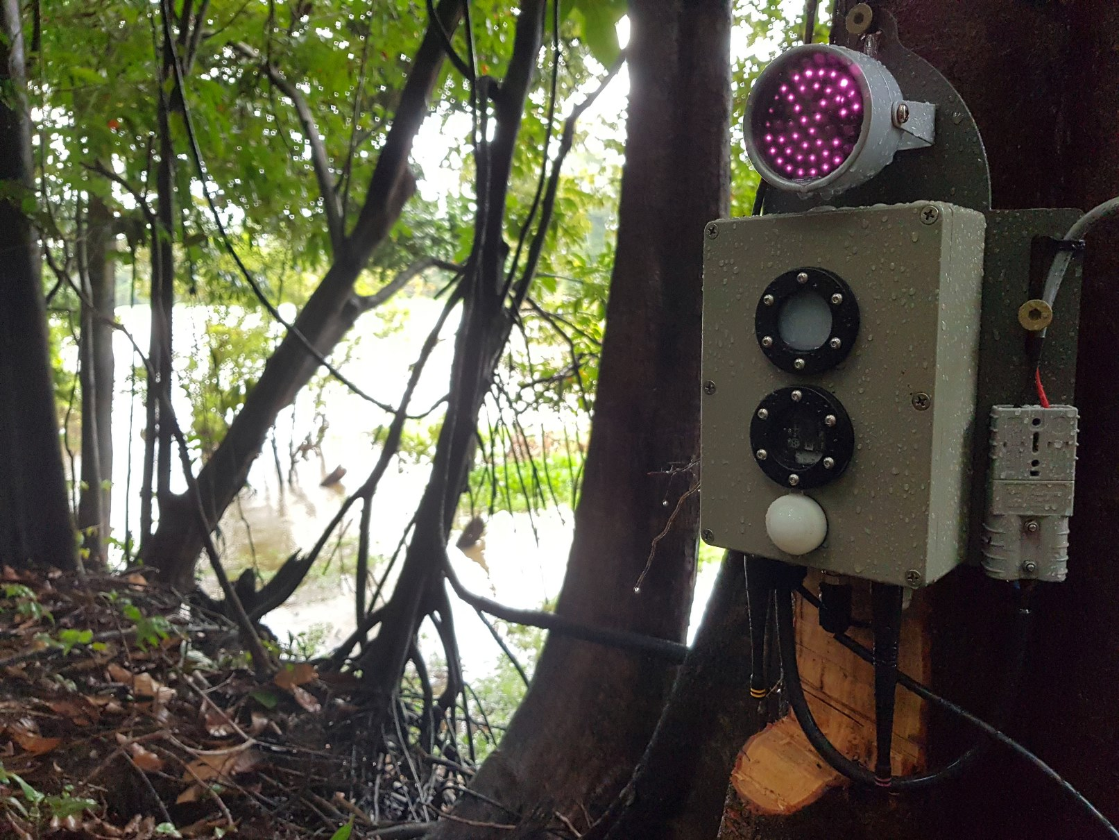 A camera- vision module mounted on a tree. The site is on a bank above the river yet low enough on the tree to capture passing animals.