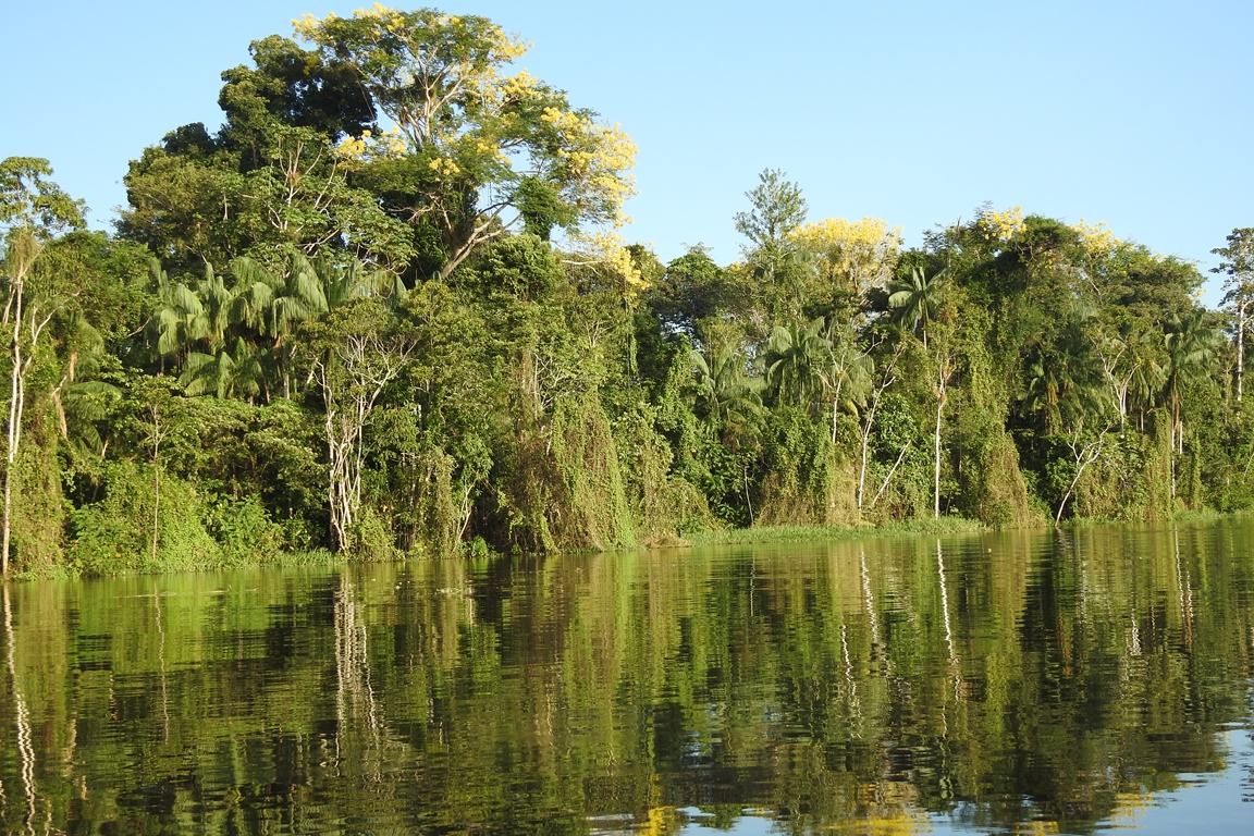 Much of the forest in the Mamiraua Reserve floods each year, a major influence on the species that can live in the area.