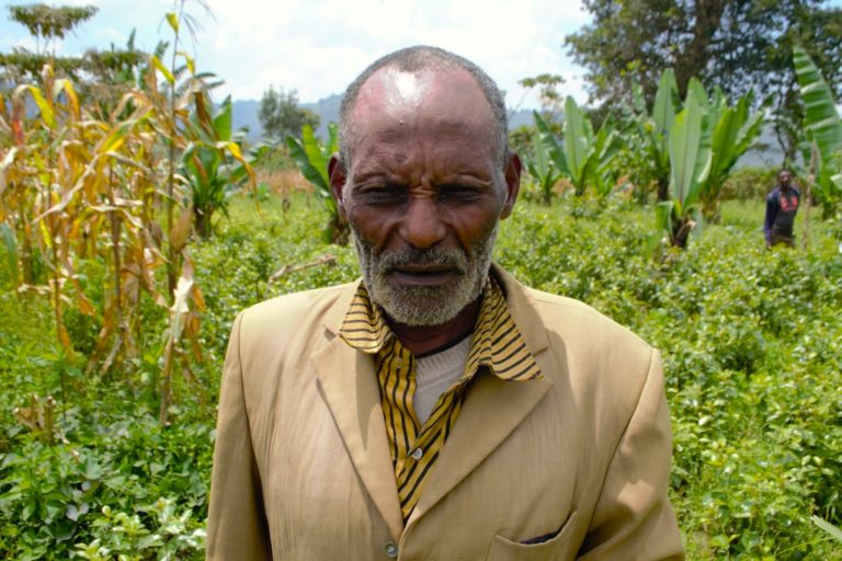 Ethiopia: Khat farming threatens food security, biodiversity, women, and
