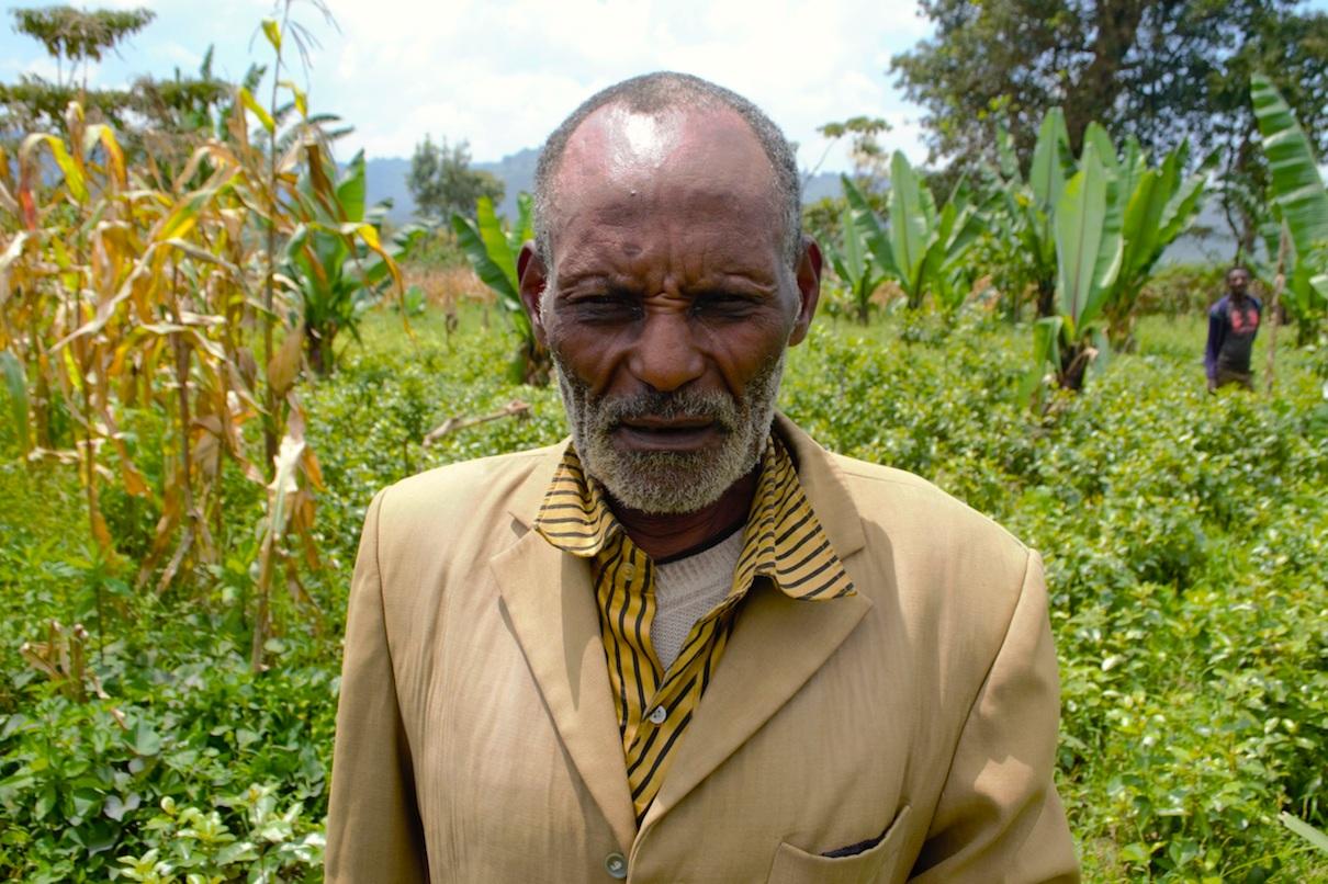 Ethiopia: Khat farming threatens food security, biodiversity