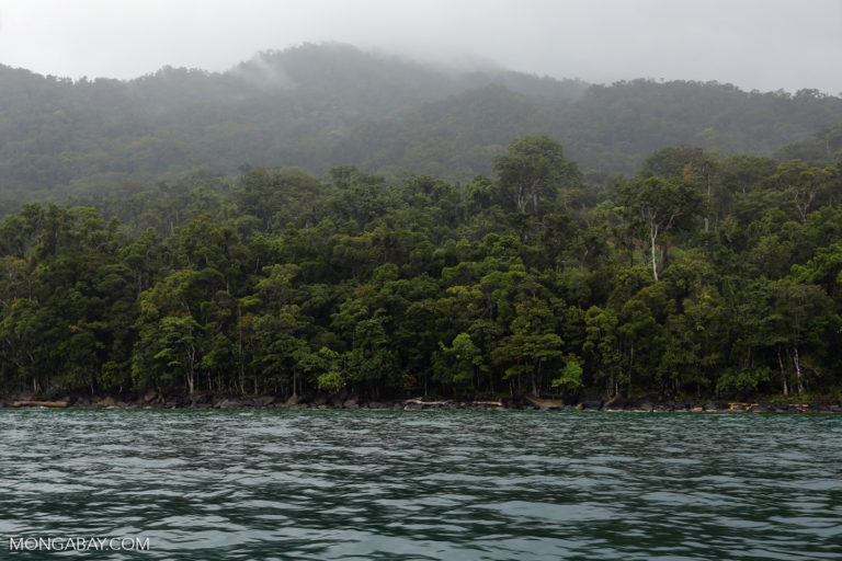 Rainforest on the Masoala Peninsula as seen from the Bay of Antongil. Photo by Rhett A. Butler.
