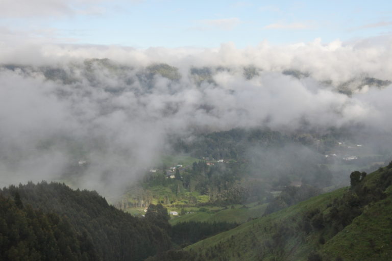 The famous Te Urewera mist shrouds the Tuawhenua valley in early morning. Image by Monica Evans for Mongabay.