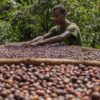 1. Adbul Kadeem inspecting drying coffee outside of his house in Manyate Village on the outskirts of Harenna Forest. Photo by Nathan Siegel for Mongabay.