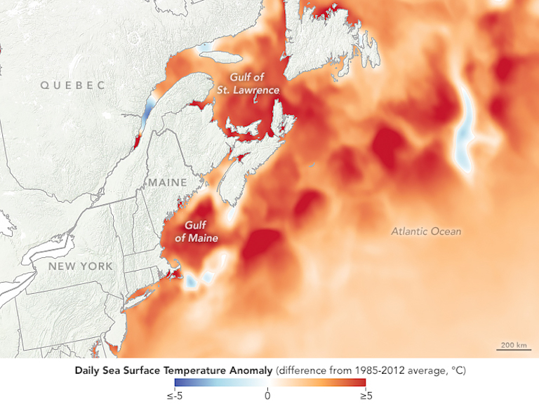 The Gulf of Maine on the U.S. east coast experienced its second-warmest temperatures on record on August 8, 2018. Image courtesy of NASA Earth Observatory.