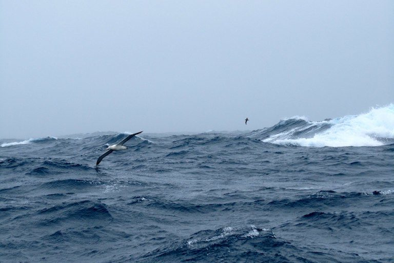 An albatross flies over the Southern Ocean. Image by Brent De Vries via Flickr (CC BY-NC 2.0).
