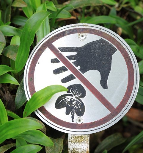 "A sign at Kadoorie Farm and Botanical Gardens in Hong Kong, which works to conserve several species that are important in trade. Collecting wild orchids is against the law in many countries, but the illegal trade persists."" Photo courtesy Amy Hinsley."